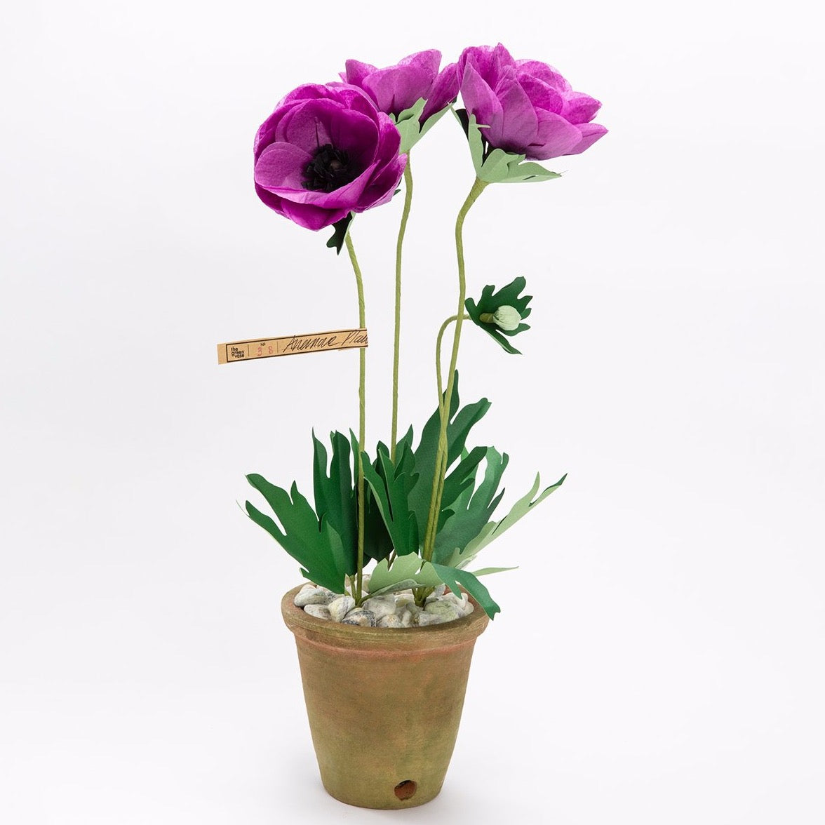 The Green Vase potted purple anemone