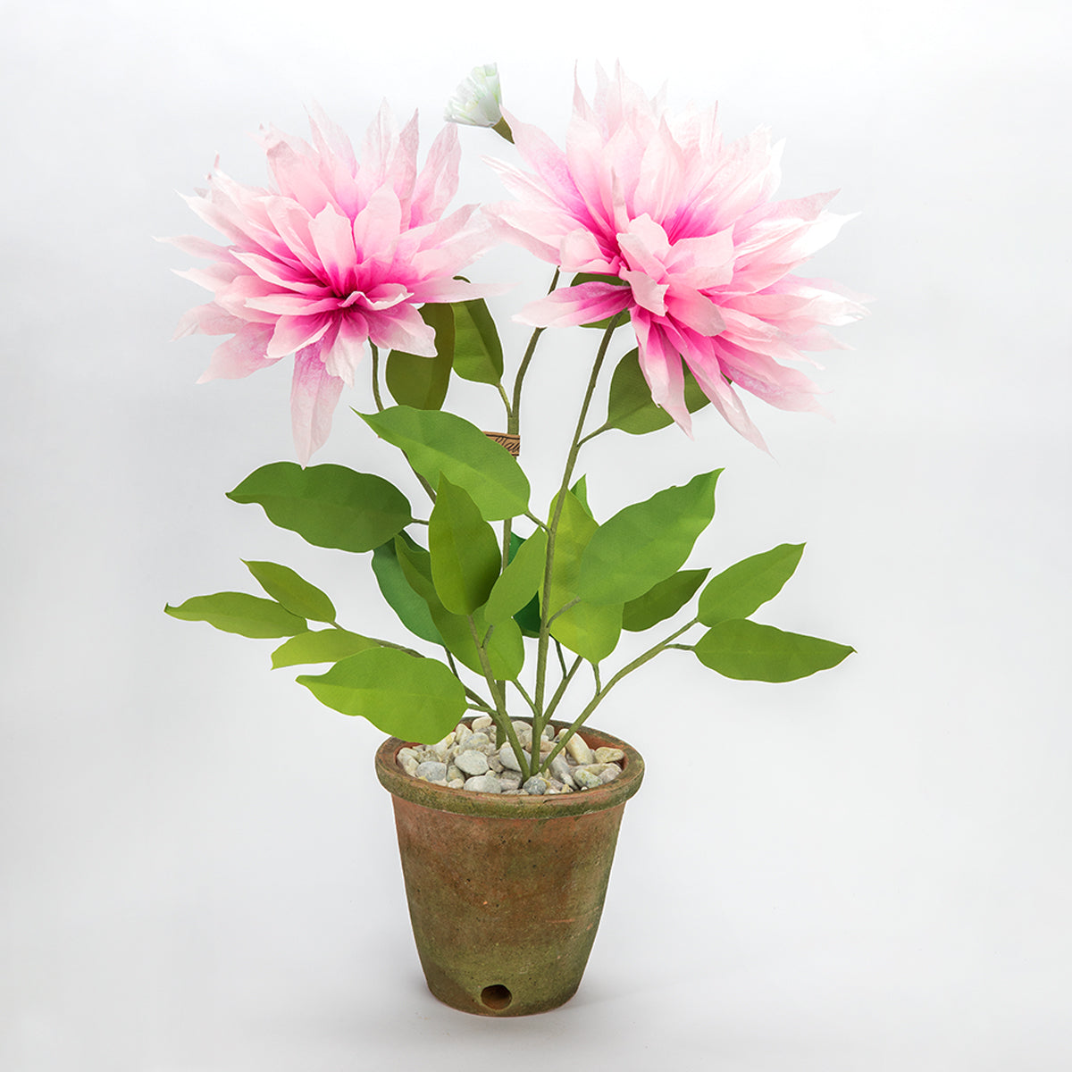 The Green Vase potted dahlia