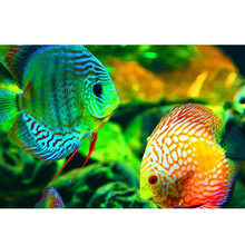 Coral Reef Fish 5D DIY Paint By Diamond Kit