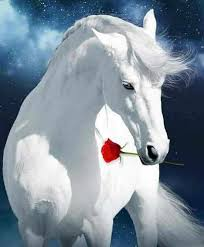 White Horse and Rose 5D DIY Diamond Painting