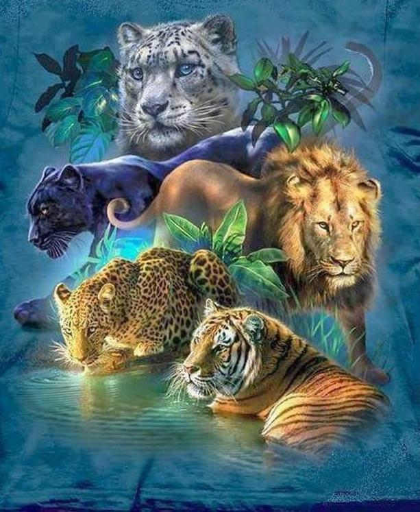 Cats of The Jungle 5D DIY Paint By Diamond Kit