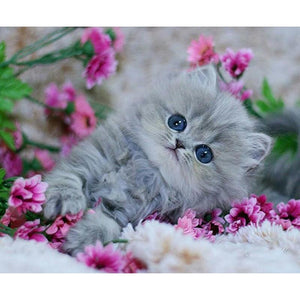 Cute Little Kitten 5D DIY Paint By Diamond Kit - Paint by Diamond