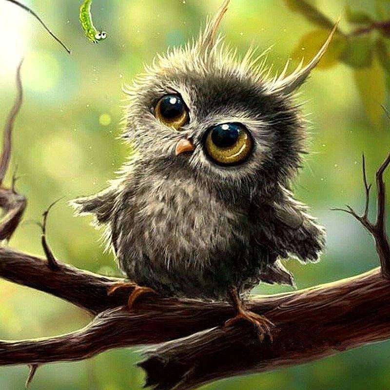 Cute Baby Owl 5D DIY Paint By Diamond Kit - Paint by Diamond