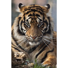 Animal tiger 5D DIY Paint By Diamond Kit - Paint by Diamond