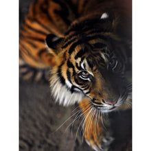 Animal tiger Looking Up 5D DIY Paint By Diamond Kit - Paint by Diamond