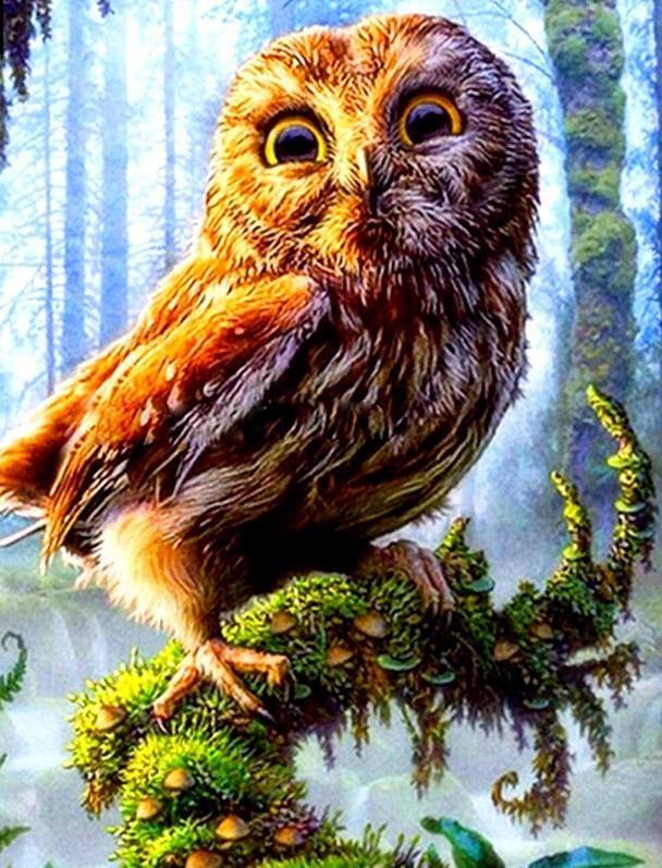 OWL 5D DIY Paint By Diamond Kit - Paint by Diamond