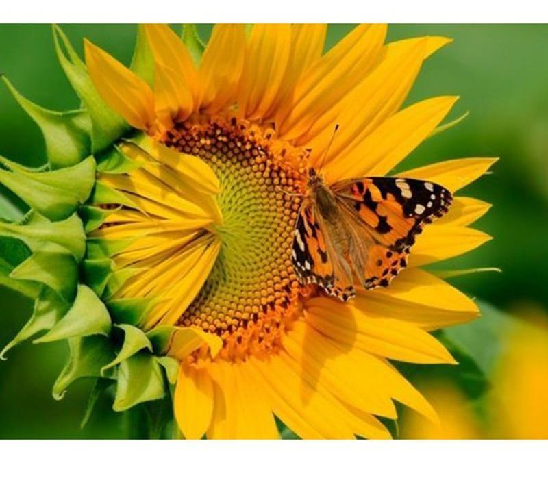 Butterfly On Flower 5D DIY Paint By Diamond Kit