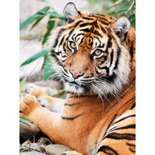 Wild Tiger 5D DIY Paint By Diamond Kit