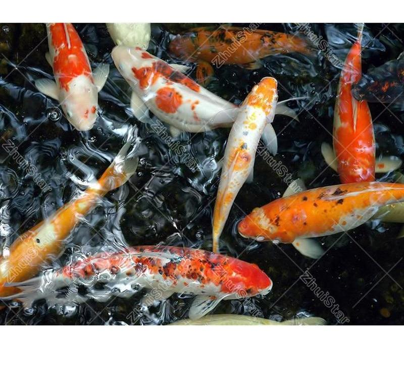 Koi Pond 5D DIY Paint By Diamond Kit