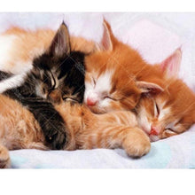 Cute Sleeping Kittens 5D DIY Paint By Diamond Kit