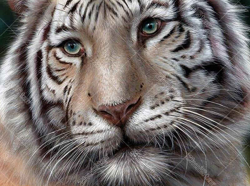 White Tiger 5D DIY Paint By Diamond Kit