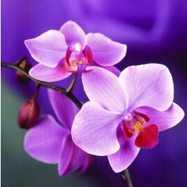 Orchid Floral 5D DIY Paint By Diamond Kit