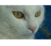 White Cat Eyes 5D DIY Paint By Diamond Kit