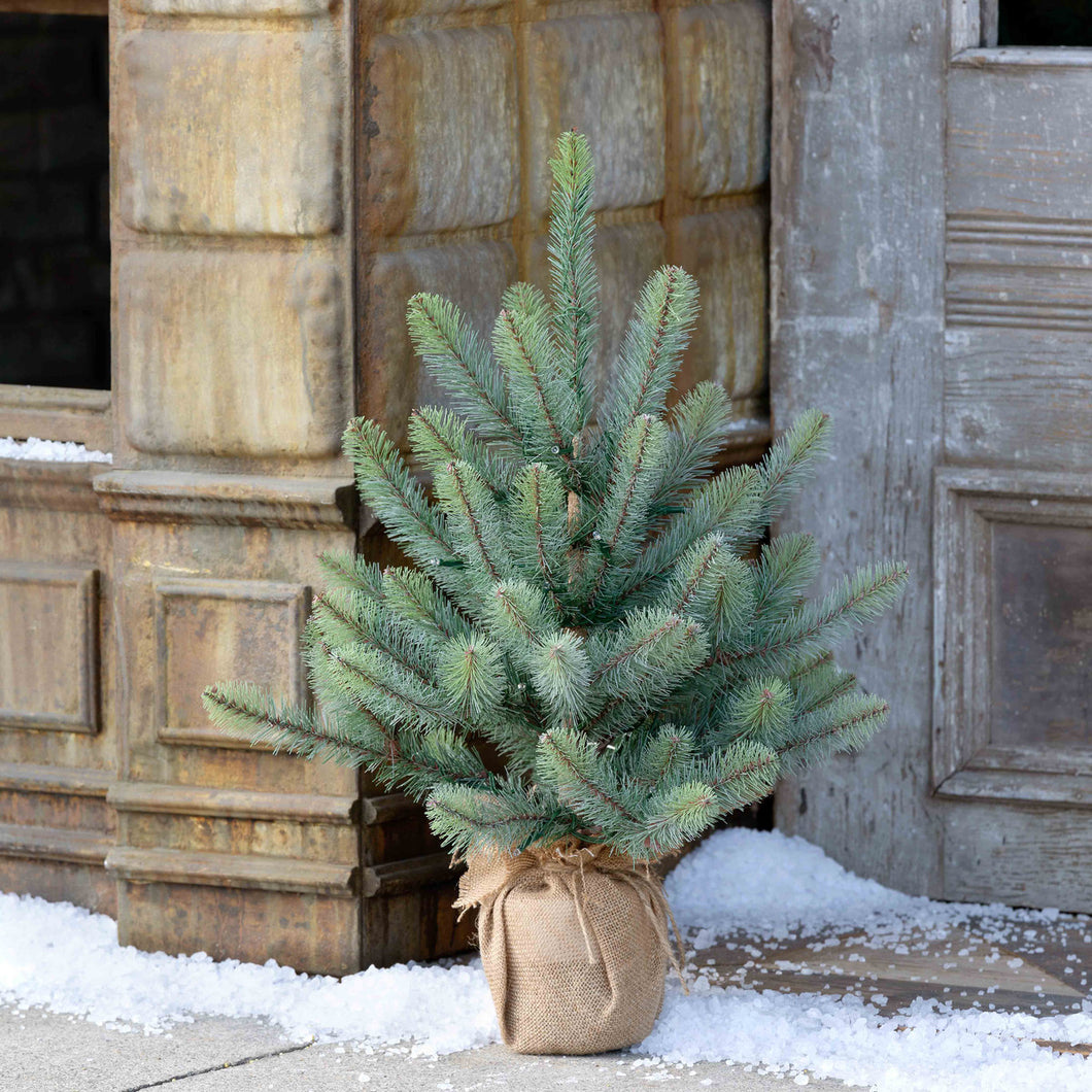 Burlap Wrapped Blue Spruce Seedling with LED Battery Lights