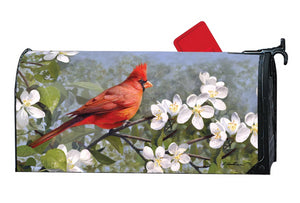 MailWrap with red male cardinal sitting in tree full of white blossoms