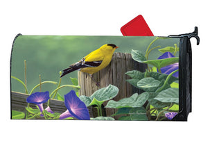 MailWrap with goldfinch perched on old rustic fence post looking out over purple morning glory blossoms vining along fence