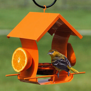 Metal House Oriole Feeder with Glass Dish