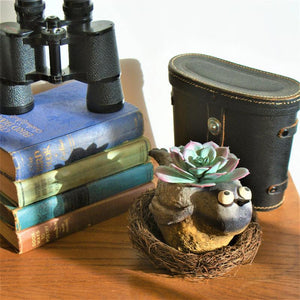Chickadee Bird Planter displayed sitting in a nest with succulent in it