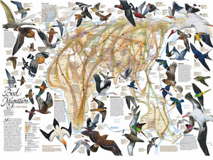 National Geographic Migratory Map included in the Eastern Bird Migration 1000 Piece Puzzle