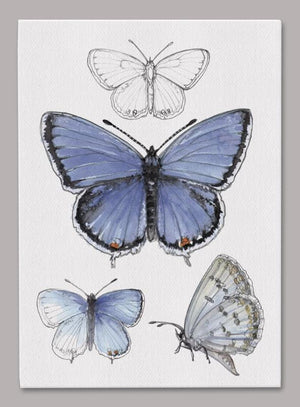Eastern Tailed-Blue Butterfly 5x7 inch Canvas displaying sketched & colorfully illustrated Butterflies