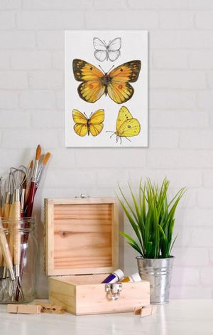 Orange Sulphur Butterfly 5x7 Canvas Wall Art