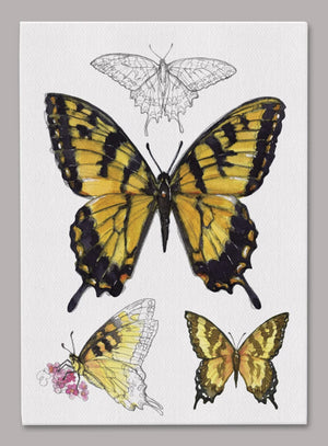 Tiger Swallowtail Butterfly 5x7 inch Canvas displaying sketched & colorfully illustrated Tiger Swallowtail Butterflies