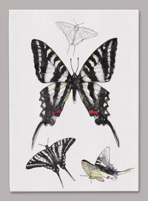 Zebra Swallowtail Butterfly 5x7 inch Canvas displaying sketched & colorfully illustrated Zebra Swallowtail Butterflies