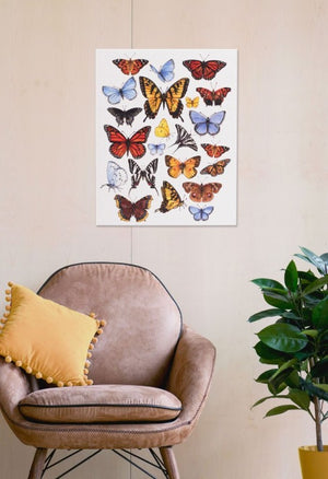 Butterfly Study 16x20 Canvas Wall Art