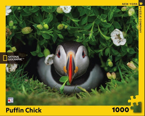 Puffin Chick 1000 Piece Puzzle