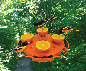 Ultimate Fruit, Jelly & Nectar Oriole Feeder displayed with Baltimore Orioles feeding on it