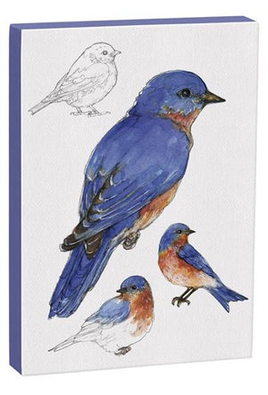 Eastern Bluebird 5x7 inch Canvas displaying sketched & colorfully illustrated Bluebirds