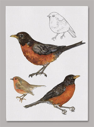 American Robin 5x7 inch Canvas displaying sketched & colorfully illustrated Robins