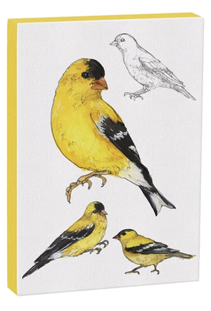 American Goldfinch 5x7 inch Canvas displaying sketched & colorfully illustrated Goldfinches
