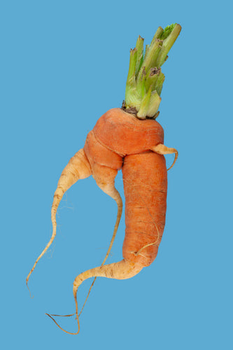 Quirky Carrot 17