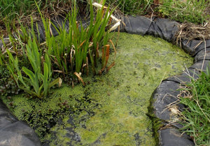 HOW TO ELIMINATE NASTY POND ODOUR