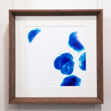 Load image into Gallery viewer, New Life // Petri Dish - Framed Print