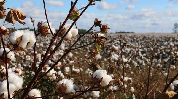 The Alternative : Organic Cotton