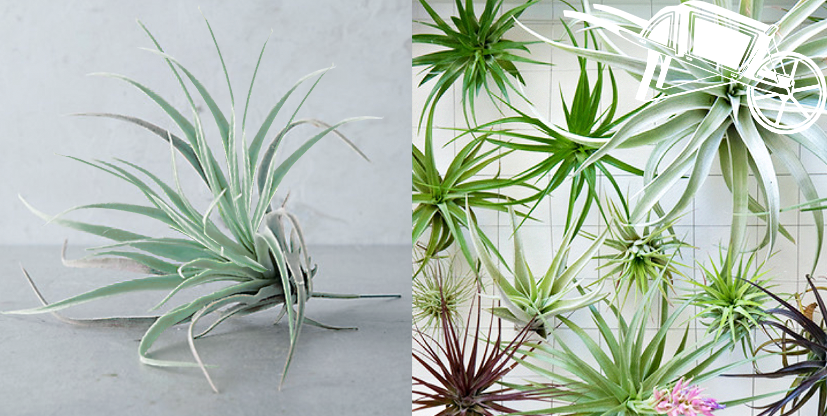 True Plants Vs Faux This Is A Game Of Spot The Real Plant