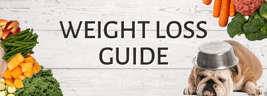 weight loss guide for dogs