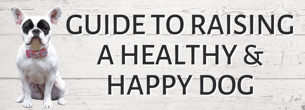 How to have a happy and healthy dog