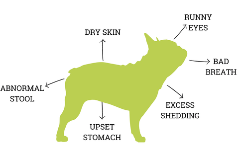 Dog allergies infograph