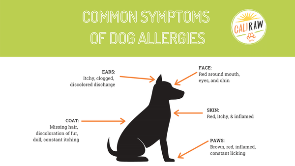 Allergies in Dogs infograph
