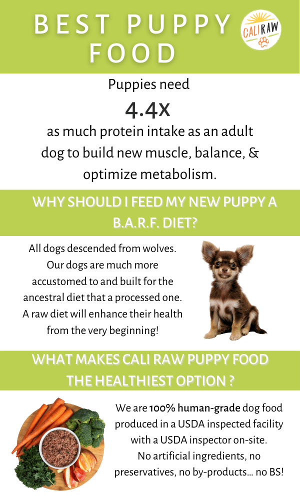 How to know what is the Best Puppy Food Infograph