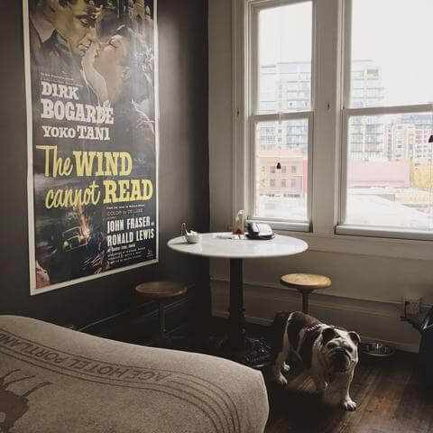 ace dog friendly hotel in los angeles