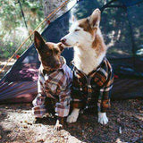 Dogs out camping
