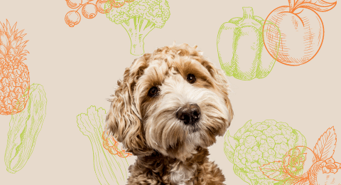 Fruit and Vegetables make a complete diet for a healthy dog with nice fur