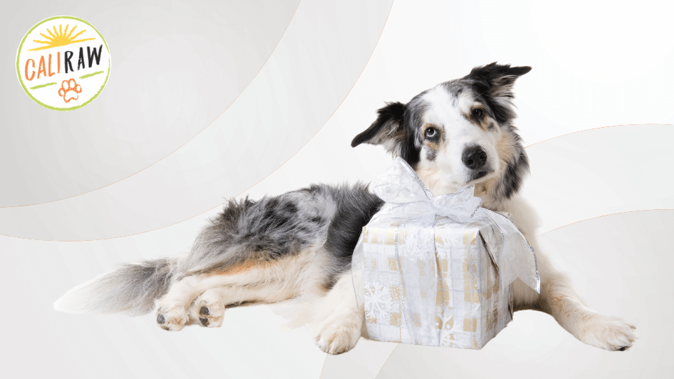Gifts you can give your fellow pet parents that their pet will love