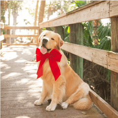 golden retriever on a bridge with a big red bow