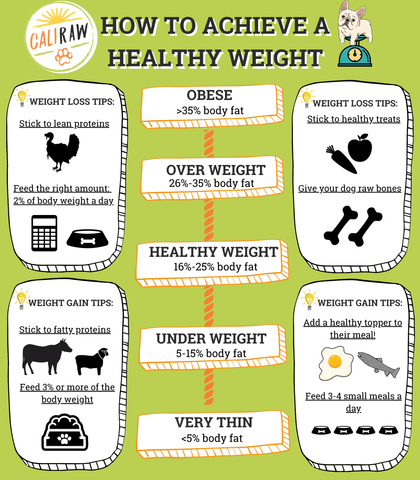 best Diet for dogs infograph