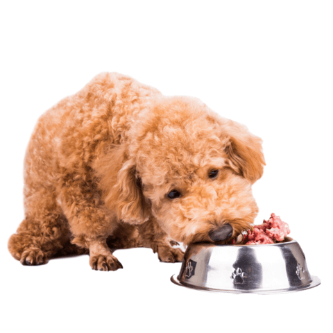 Raw Dog Food for beginners